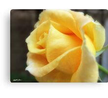 My First Yellow Rose 1 Canvas Print