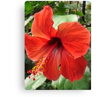 Postbox Red Canvas Print