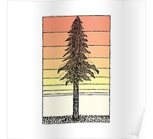 Coastal Redwood Sunset Sketch Poster