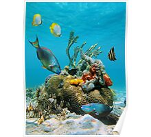 Colorful tropical marine life underwater sea Poster