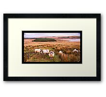 Ram of Donegal Framed Print