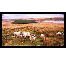 Ram of Donegal Photographic Print
