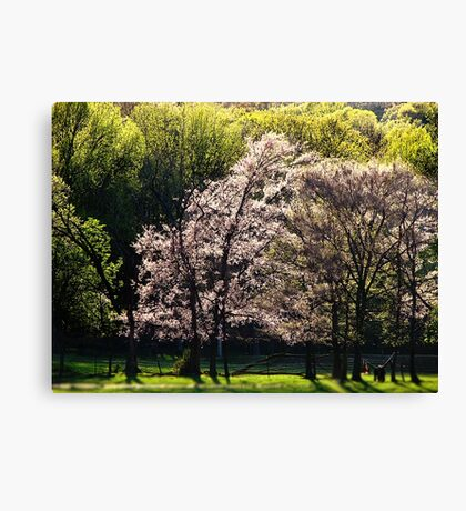 Lightly Spring Canvas Print