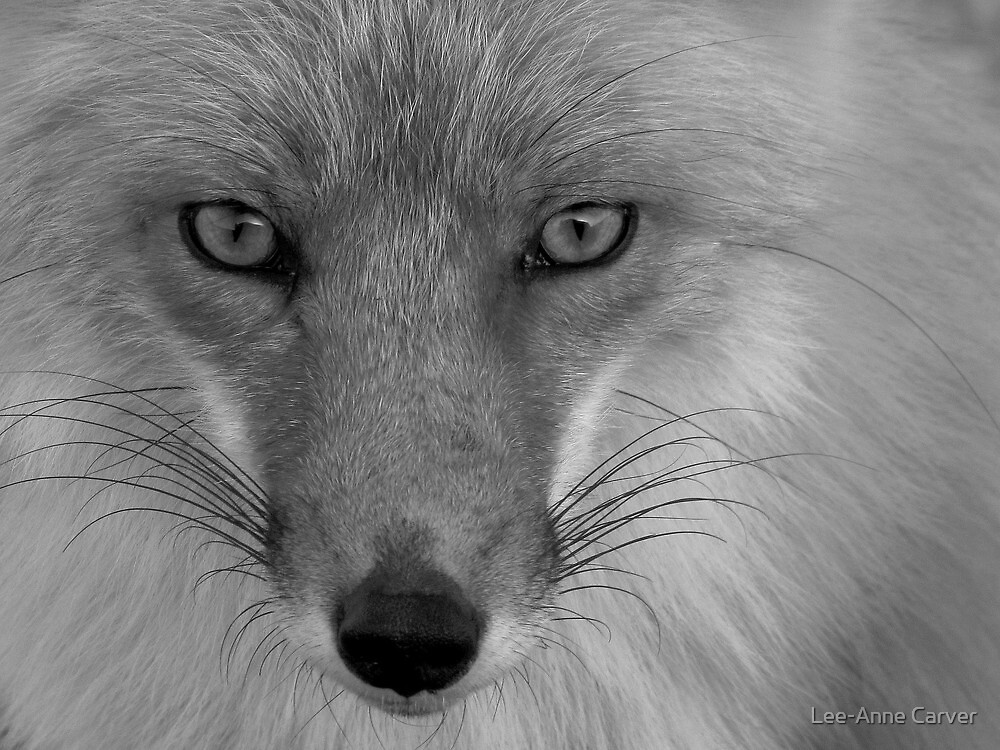 Chilla Up Close by Lee-Anne Carver