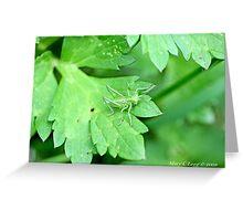Grasshopper green on green leaf Greeting Card