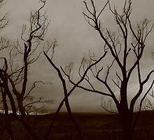 A bushfire story 1 by Jenny Wood