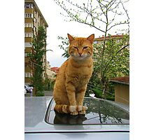 Lovely cat! Photographic Print