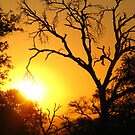 African sunset by Explorations Africa Dan MacKenzie