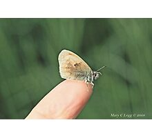 Small  heath butterfly, coenonympha pamphilus, on photographer's finger Photographic Print