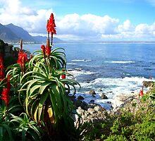 Aloe Cliff by Robbie Labanowski
