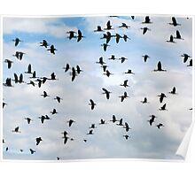 White-faced Ibis ~ Flock Poster