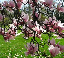 Magnolia ~ From The Inside Out by artwhiz47