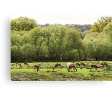 Deer at Bolderwood Canvas Print
