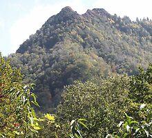 A Peak thru the Trees by Bob Hardy