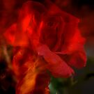 Fire in my Soul. by Lozzar Flowers & Art