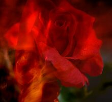Fire in my Soul. by Lozzar Flowers & Art
