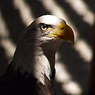 American Eagle at the Rescue Mission by BCallahan