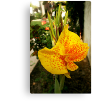 Canna Lily, Opening Performance  Canvas Print