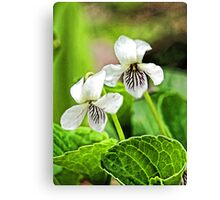 Two Wildflowers - Bridgton,  Maine Canvas Print