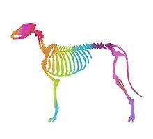 Funky rainbow Dog bones by FluffyGerbil