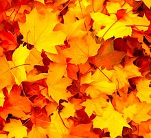 Maple Leaves by Tr0y