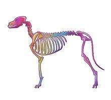 Funky rainbow Dog bones (lined version) by FluffyGerbil