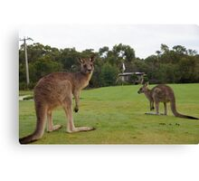 Golfing Roo's Canvas Print