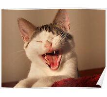 Max As Devil-Cat! Poster