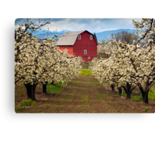 Red Barn Spring Canvas Print