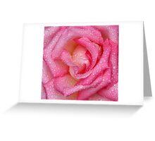 Macro pink rose with rain drops Greeting Card