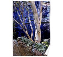 Red Gum, Barrys Falls Poster