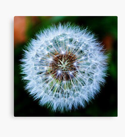 Ethereal Dandelion Canvas Print