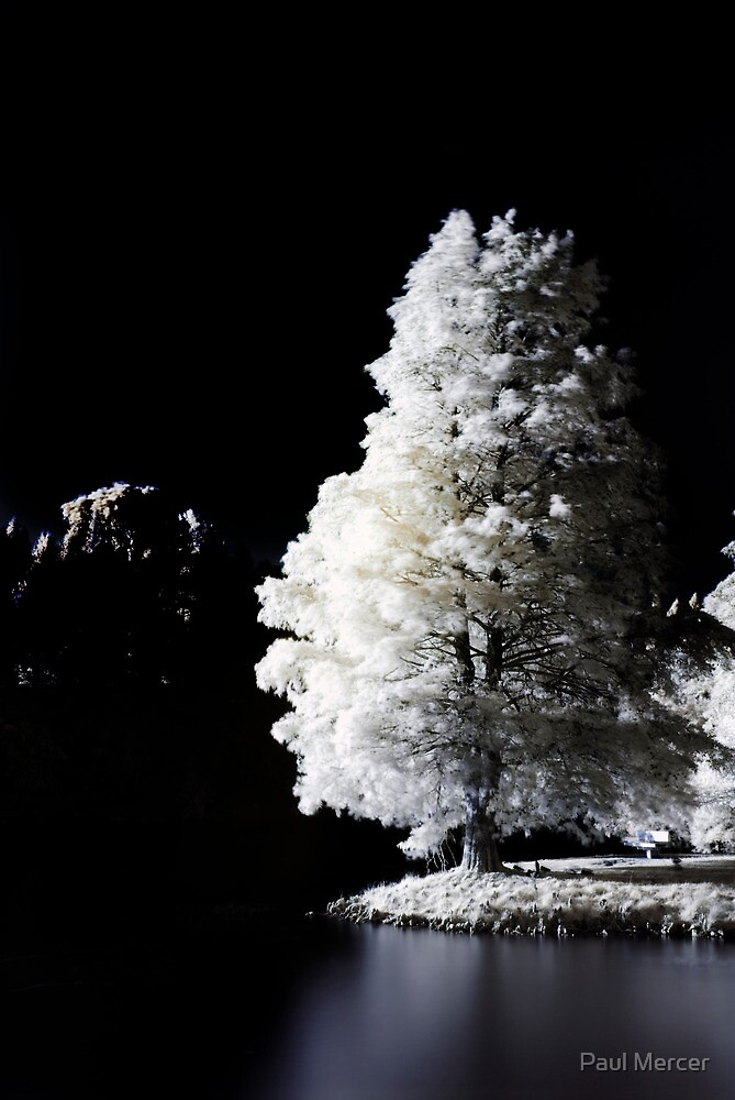 Infrared tree by Paul Mercer