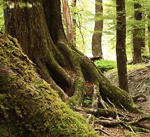 Mystical mossy forest 3 by Jenny Wood