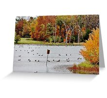 Geese and Ducks at the Pond Greeting Card