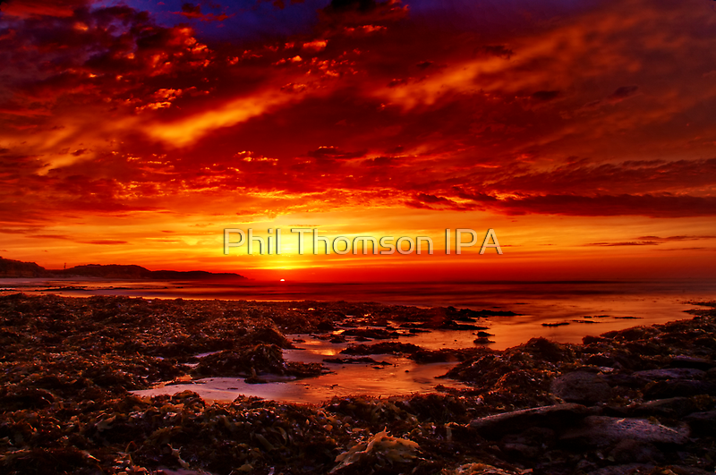 """""""Surrender' by Phil Thomson IPA"""