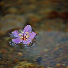 float on by Shauna Stannard