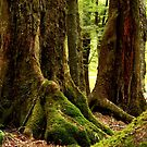 Mystical mossy forest 5 by Jenny Wood