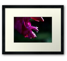 Rays on drops Framed Print