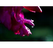 Rays on drops Photographic Print