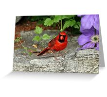 The Cardinal Stare Greeting Card