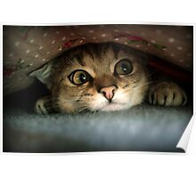 Sweet Cat Poster