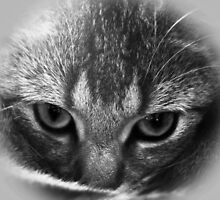 Cats' Eyes by snapandstitch