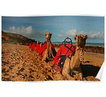 The Camels of Cable Beach. Poster