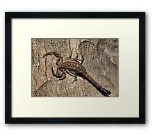 Little Sting Framed Print