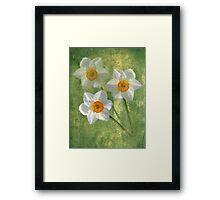 Three For Spring Framed Print