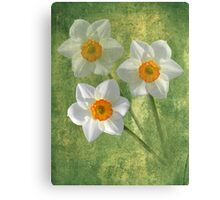 Three For Spring Canvas Print