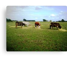 Happy Cows - with their hay Canvas Print