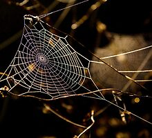 Web drops.. by Steve Chapple