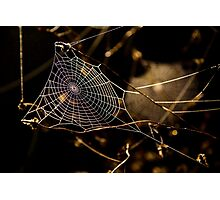 Web drops.. Photographic Print